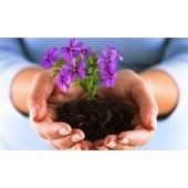 Бізнес на квітах – чим вигідно займатися фермеру?