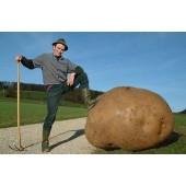 Картофелесажалки для посадки картофеля
