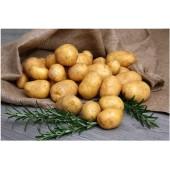 Технологія вирощування ранньої картоплі